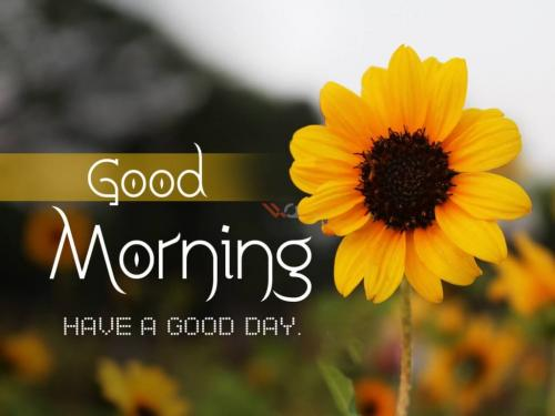 Good-Morning-Have-a-good-day
